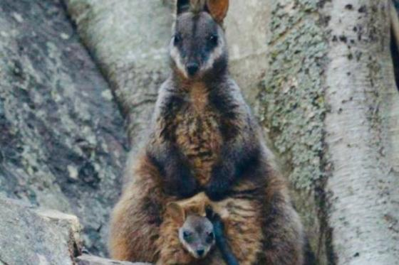 ZERO EXTINCTIONS TARGET SET FOR NSW NATIONAL PARKS