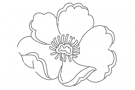 Hornsby RSL ANZAC Colouring-In Sheets